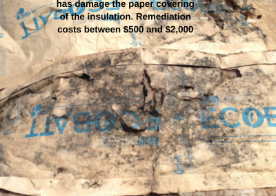 Moisture from condensation that has damage the paper covering of the insulation. Remediation costs between $500 and $2,000